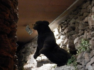 Bear emerging from the cave. Causal.